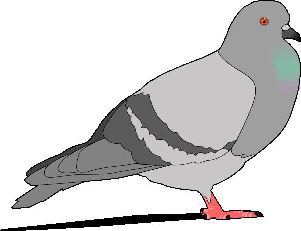 600x460 Pigeon Clip Art Free Vector 4vector
