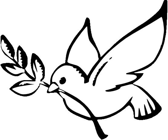 555x463 White Dove Clipart Black And White