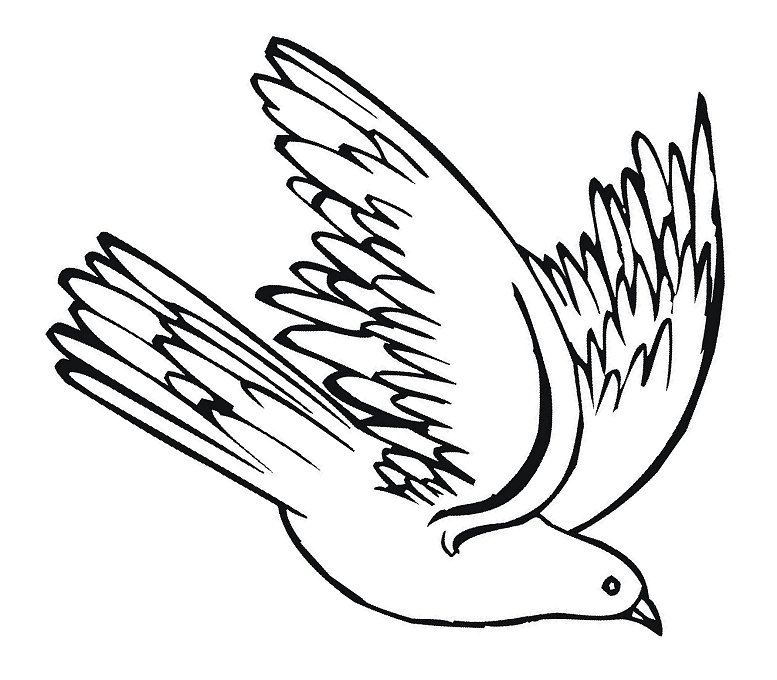777x680 White Clipart Pigeon Flying