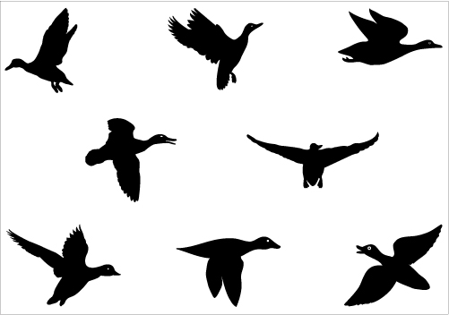 501x352 Flying Duck Silhouette Vector Graphics