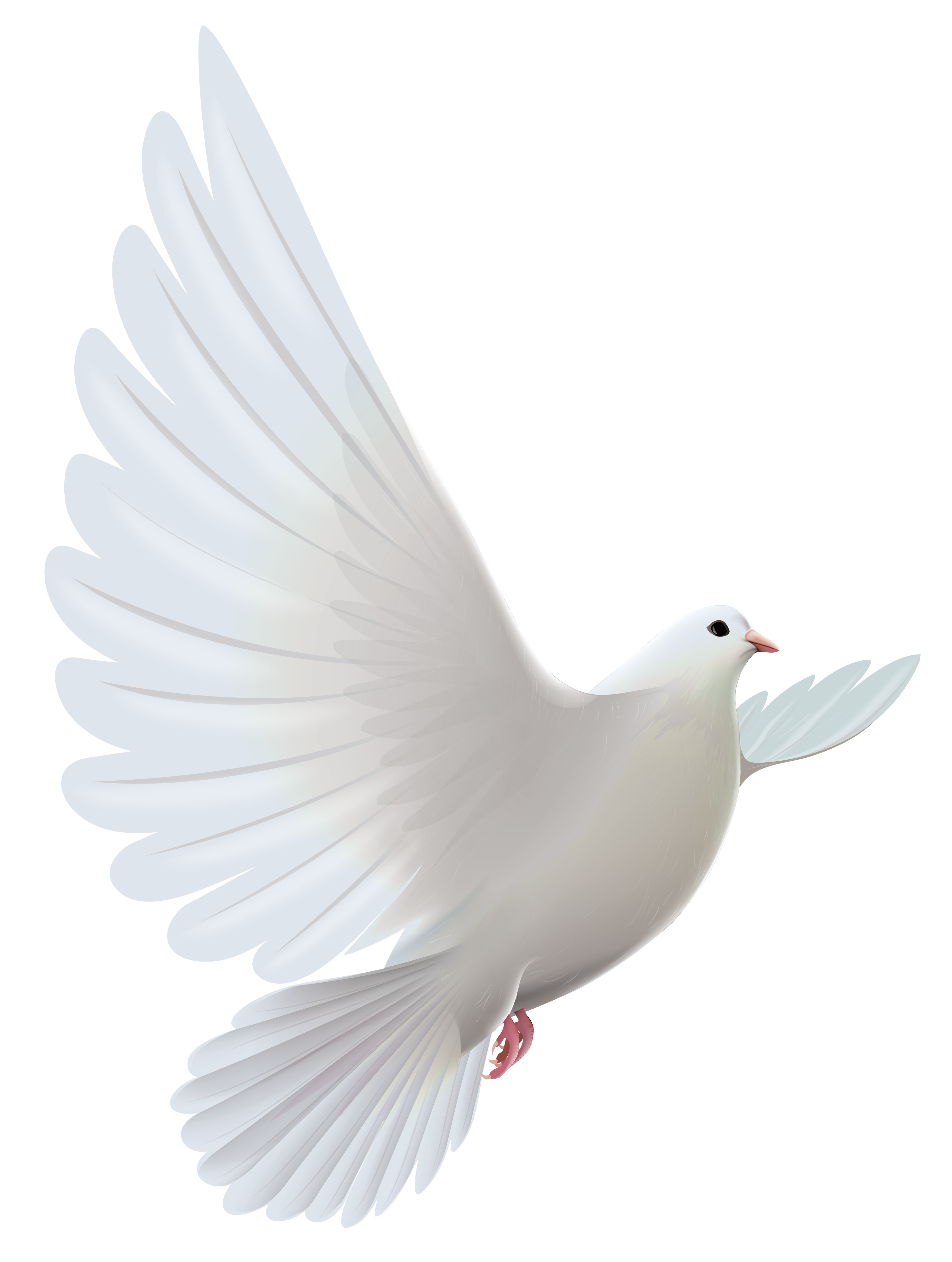 3904x5175 White Dove Transparent Png Clipartu200b Gallery Yopriceville
