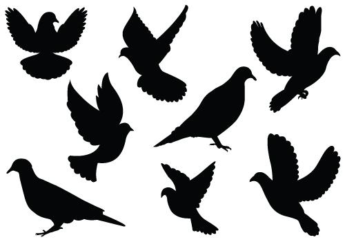 500x350 White Dove Clipart Flight Silhouette