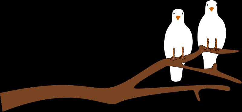 800x373 Sitting Dove Clipart, Explore Pictures