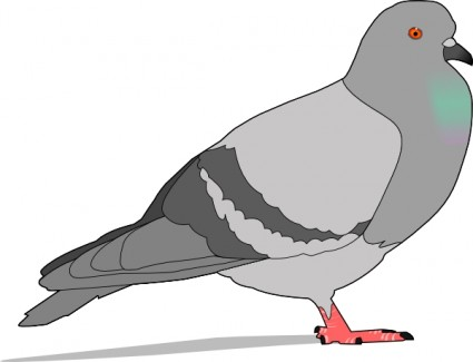 425x325 Wood Pigeon Ring Dove Clip Art Download