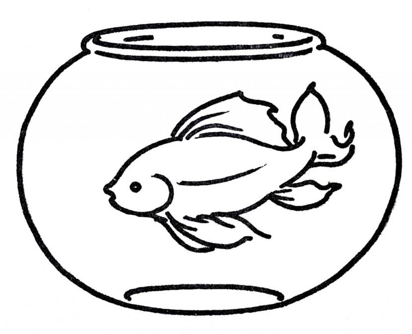 830x672 Fish Bowl Clipart Golden Fish