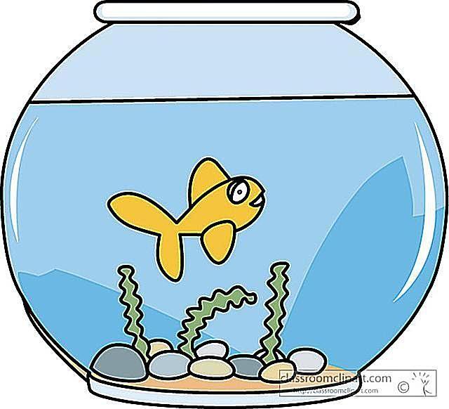 640x582 Fish Bowl Fish In Clip Art