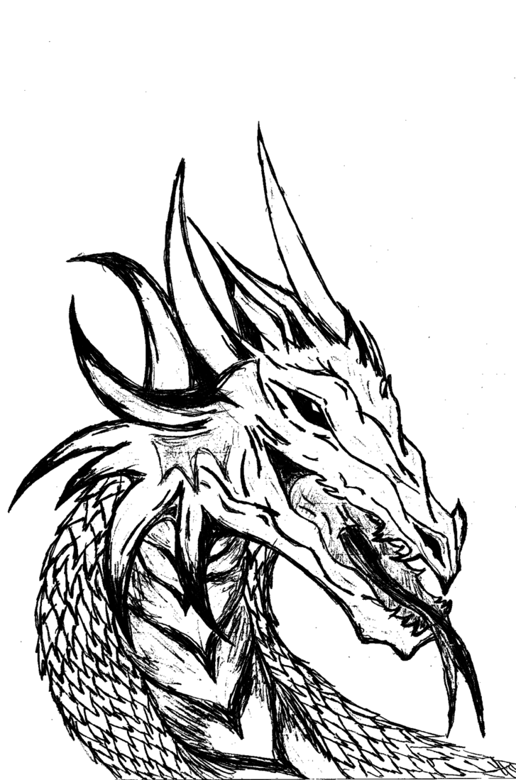 727x1099 Dragon Head (Black And White) By Bellep53
