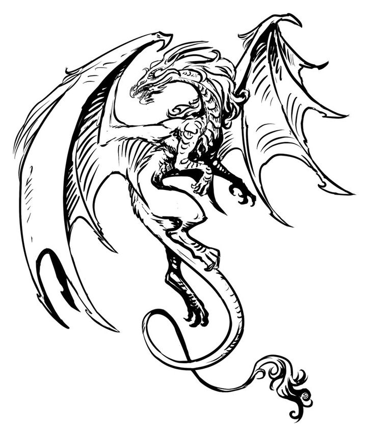 736x856 648 Best Dragons In Black And White