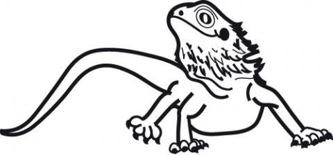 480x224 Lizard Clipart Bearded Dragon