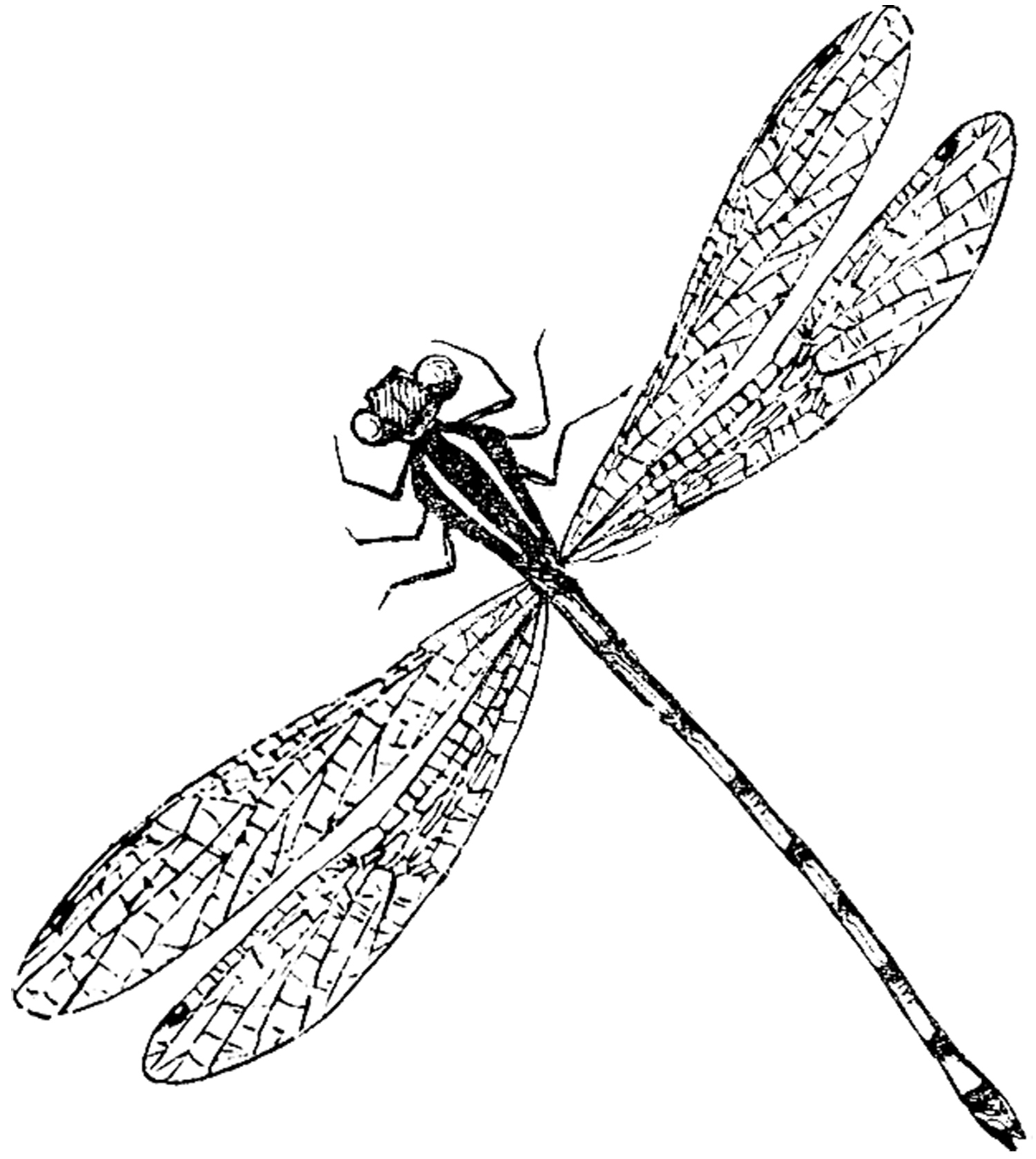 1500x1677 Antique Dragonfly Image