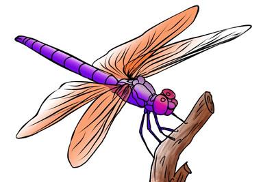 400x267 Free Dragonfly Clip Art 4