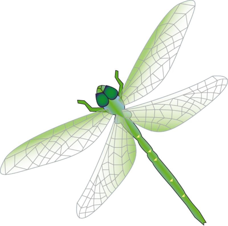 800x796 Dragonfly Clip Art