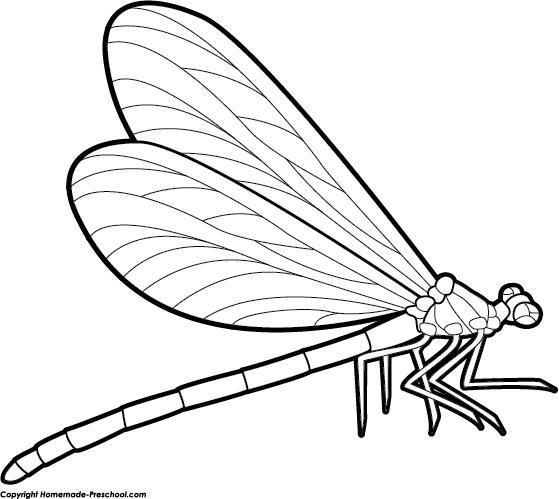 559x499 Dragonfly Clipart Black And White