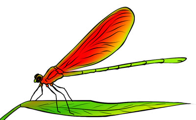 400x246 Free Dragonfly Clip Art Drawings And Colorful Images 4