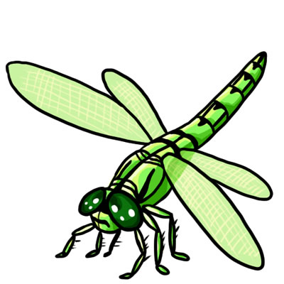 400x400 Free Dragonfly Clip Art Drawings Andlorful Images