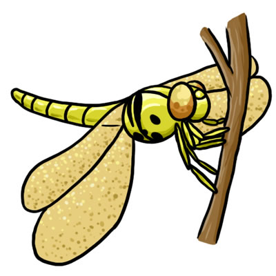 400x400 Free Dragonfly Clip Art 2 Clipartcow
