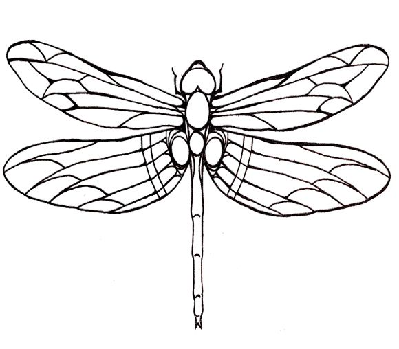 image about Dragonfly Template Printable referred to as Dragonfly Define Cost-free obtain excellent Dragonfly Determine upon