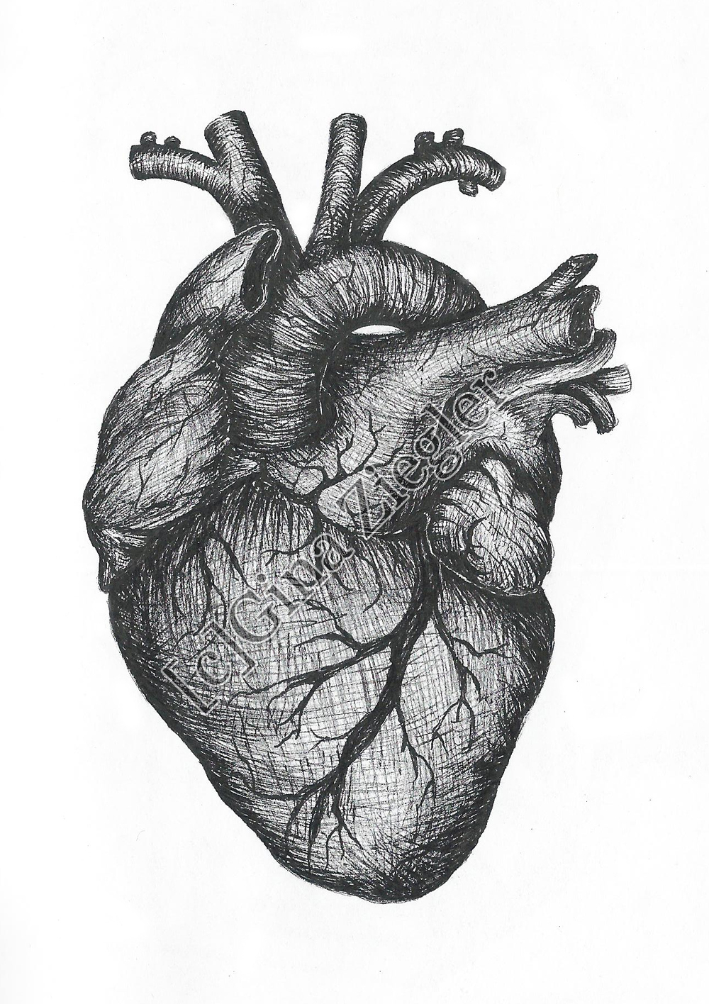 1000x1416 Drawing Of A Real Heart