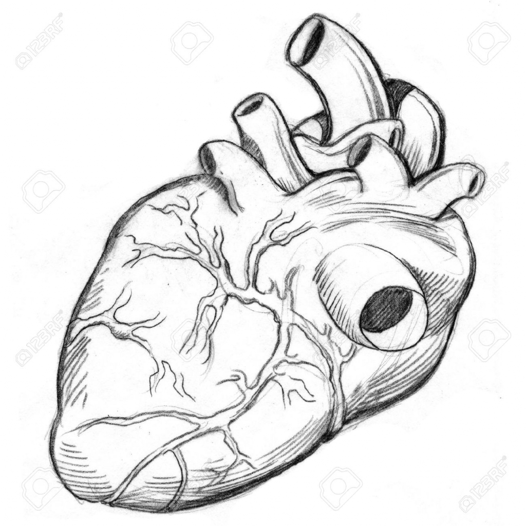 1024x1024 Anatomy Heart Drawing Image Collections