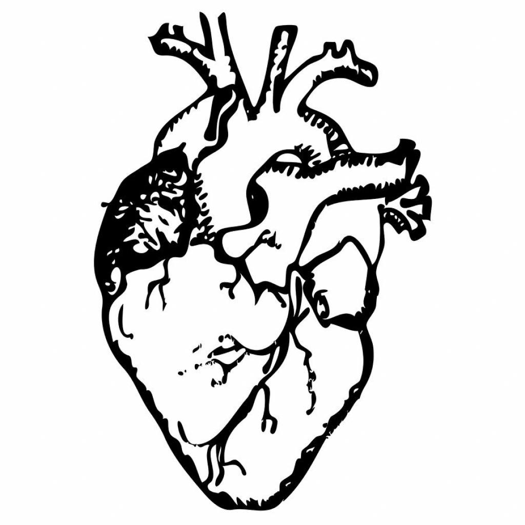 1024x1024 Real Heart Drawing
