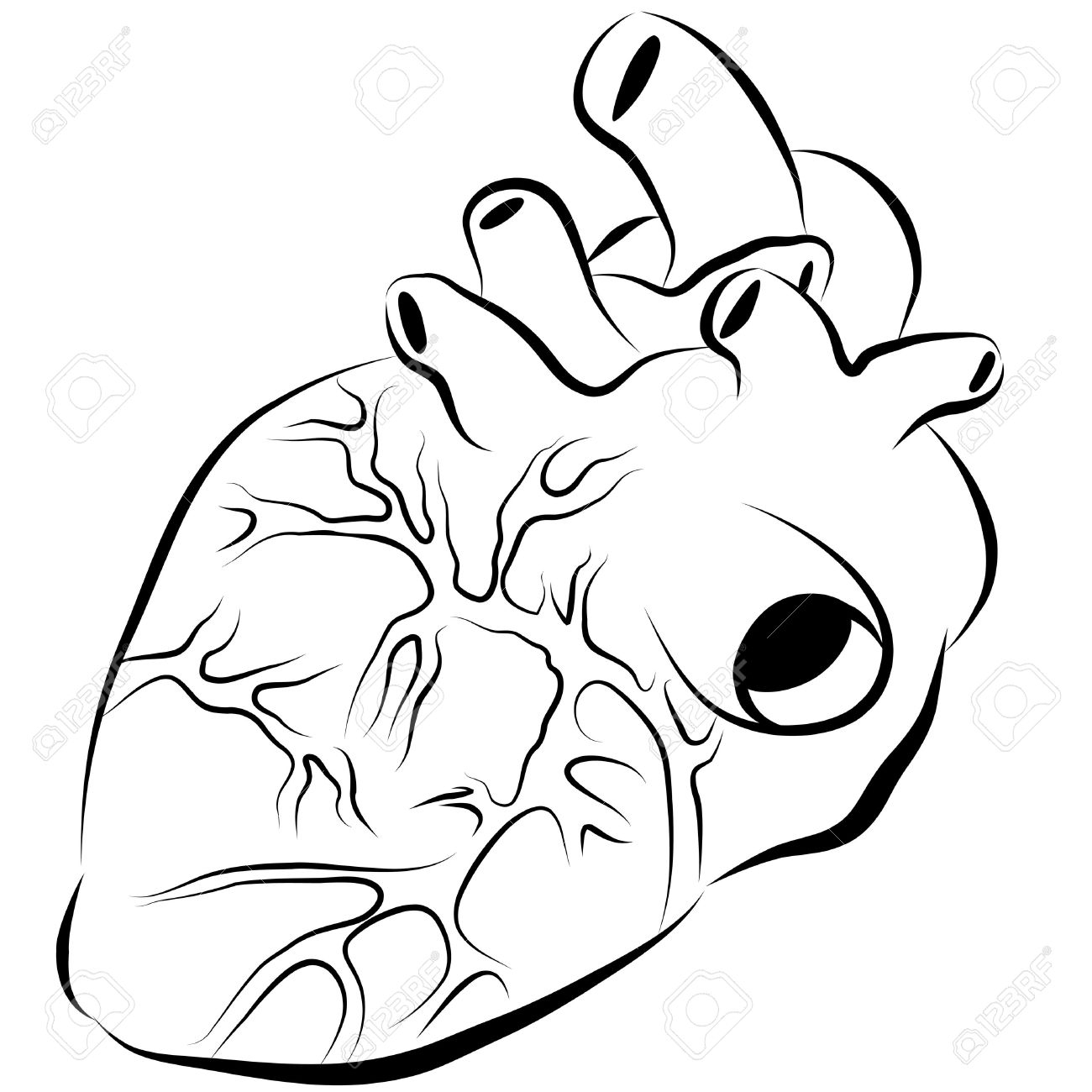 1300x1300 Simple Human Heart Drawing An Image Of A Human Heart Ink Drawing