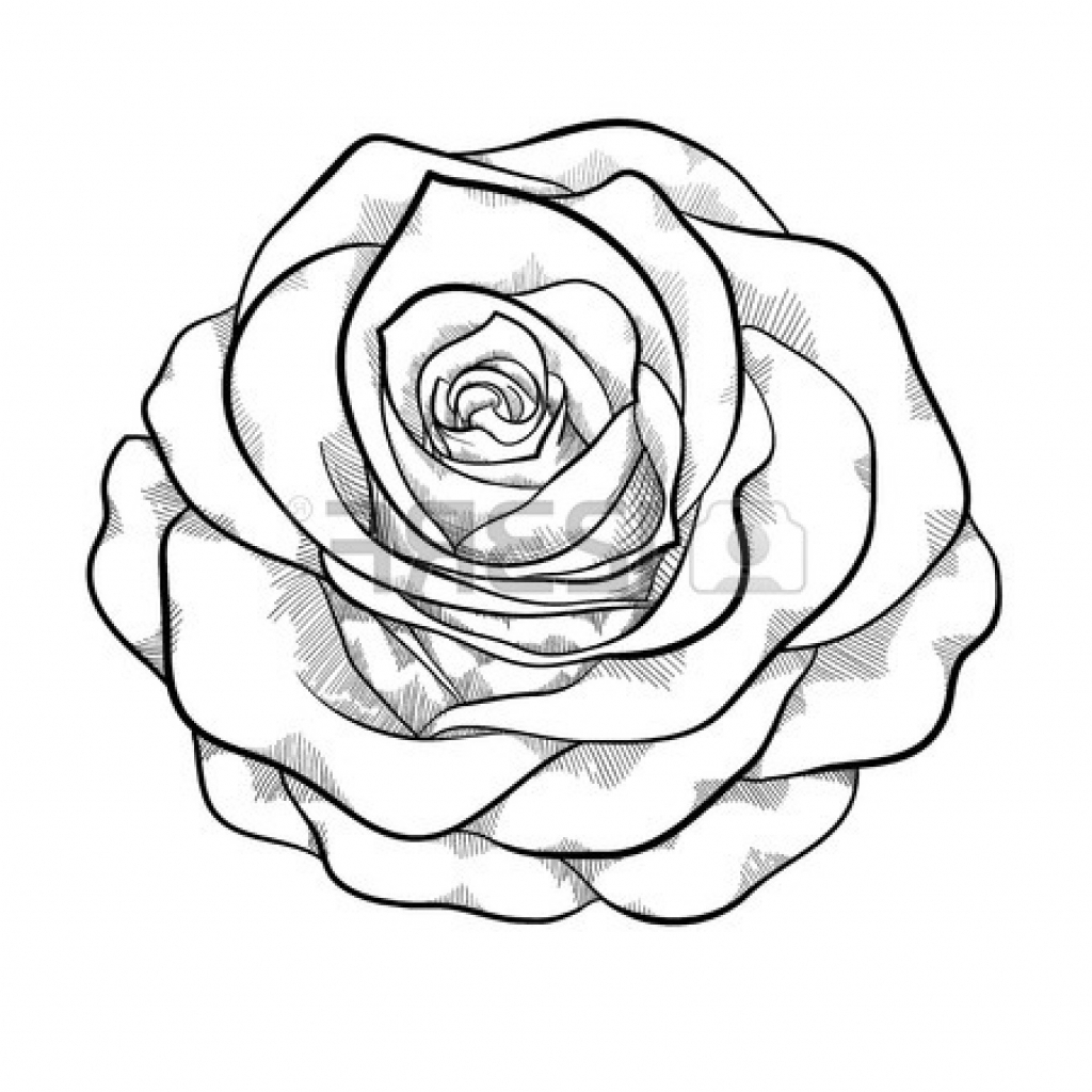 1024x1024 Rose Drawing Outline Line Drawing Rose Clipartsco