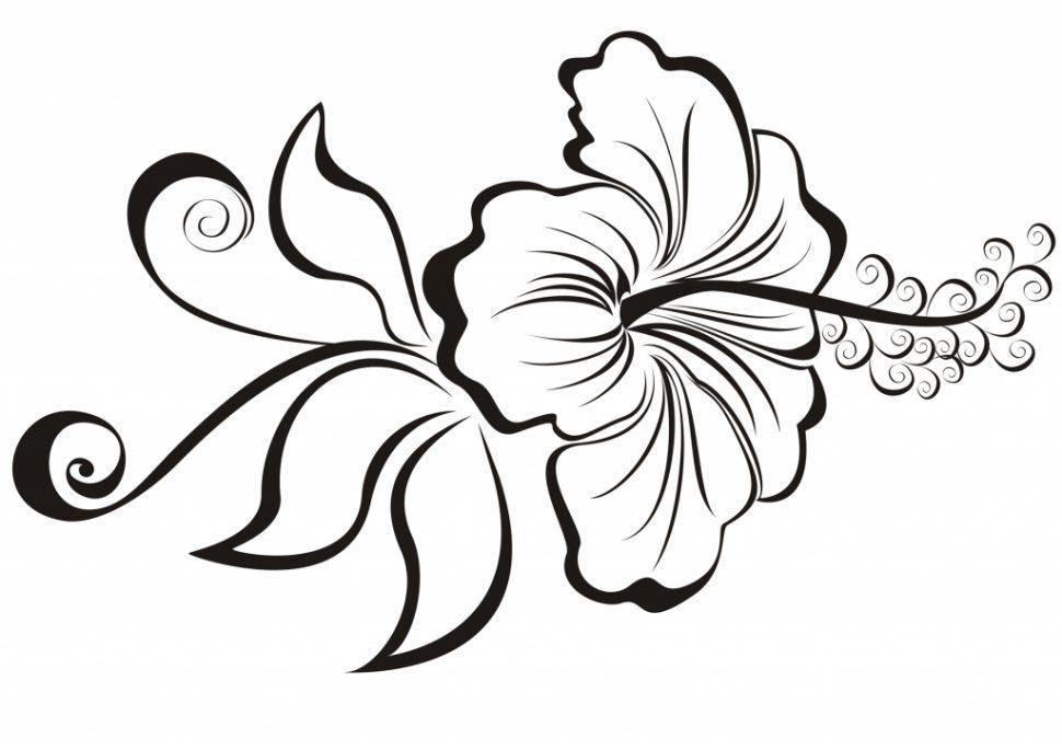 970x685 Flowers To Draw