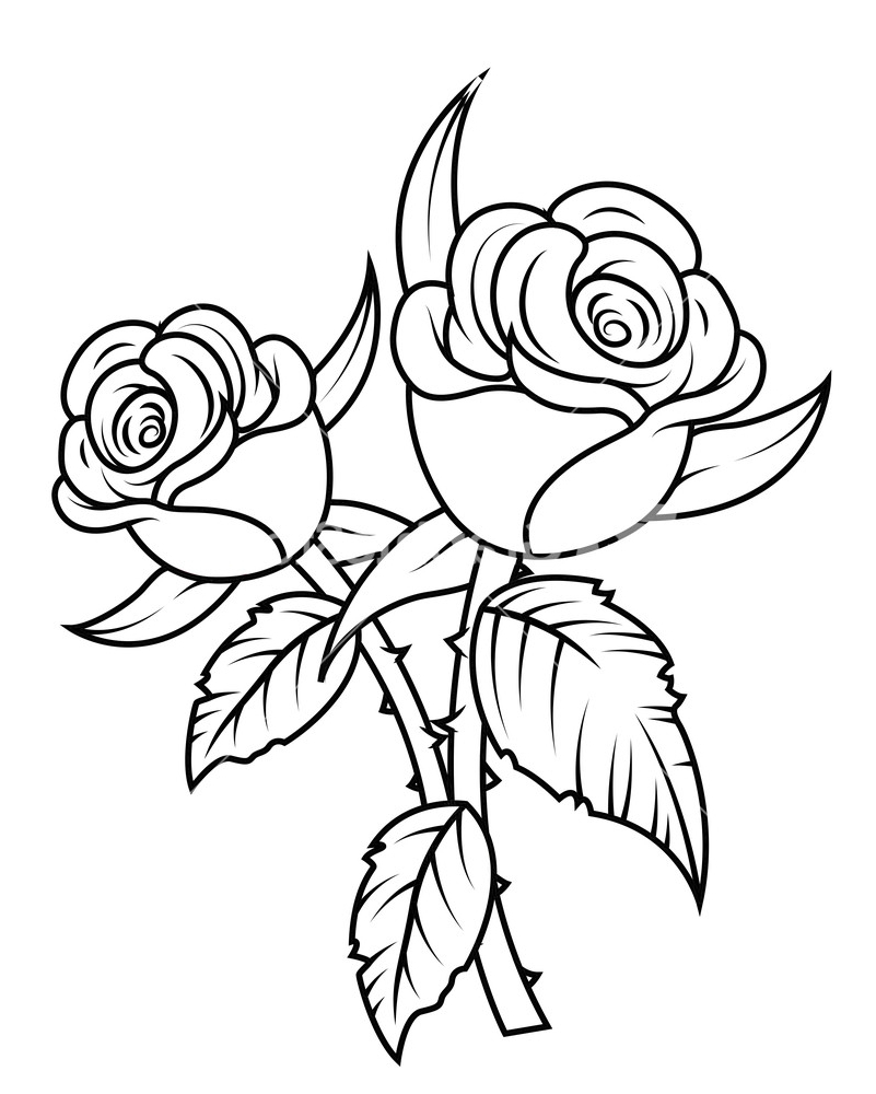 801x1000 Rose Flower Black And White Drawing Line Art Drawing Of A Rose