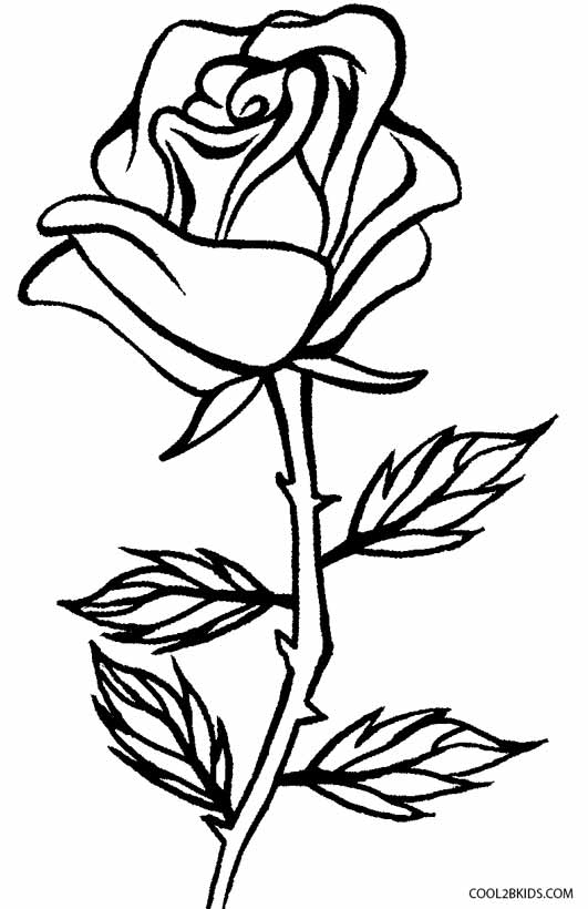 531x820 Draw Rose Coloring Page 54 Additional Coloring Print