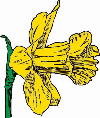 Drawings Of Daffodils