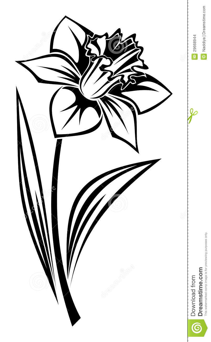 804x1300 Daffodil Clipart Black And White