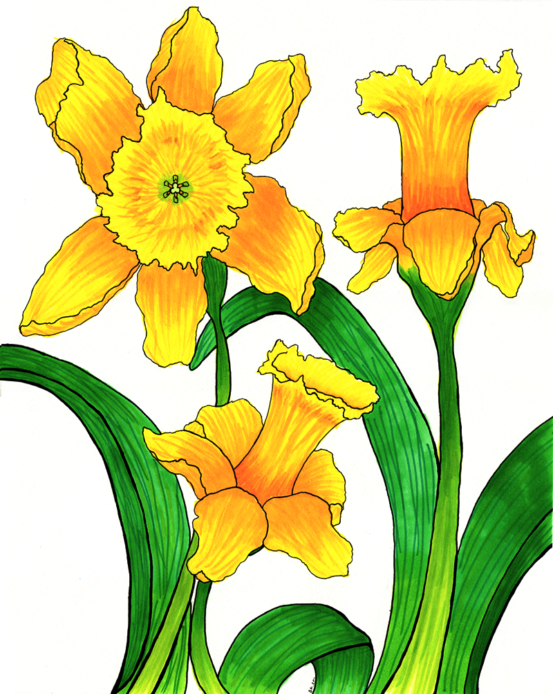 800x1003 Daffodil Clipart Cartoon