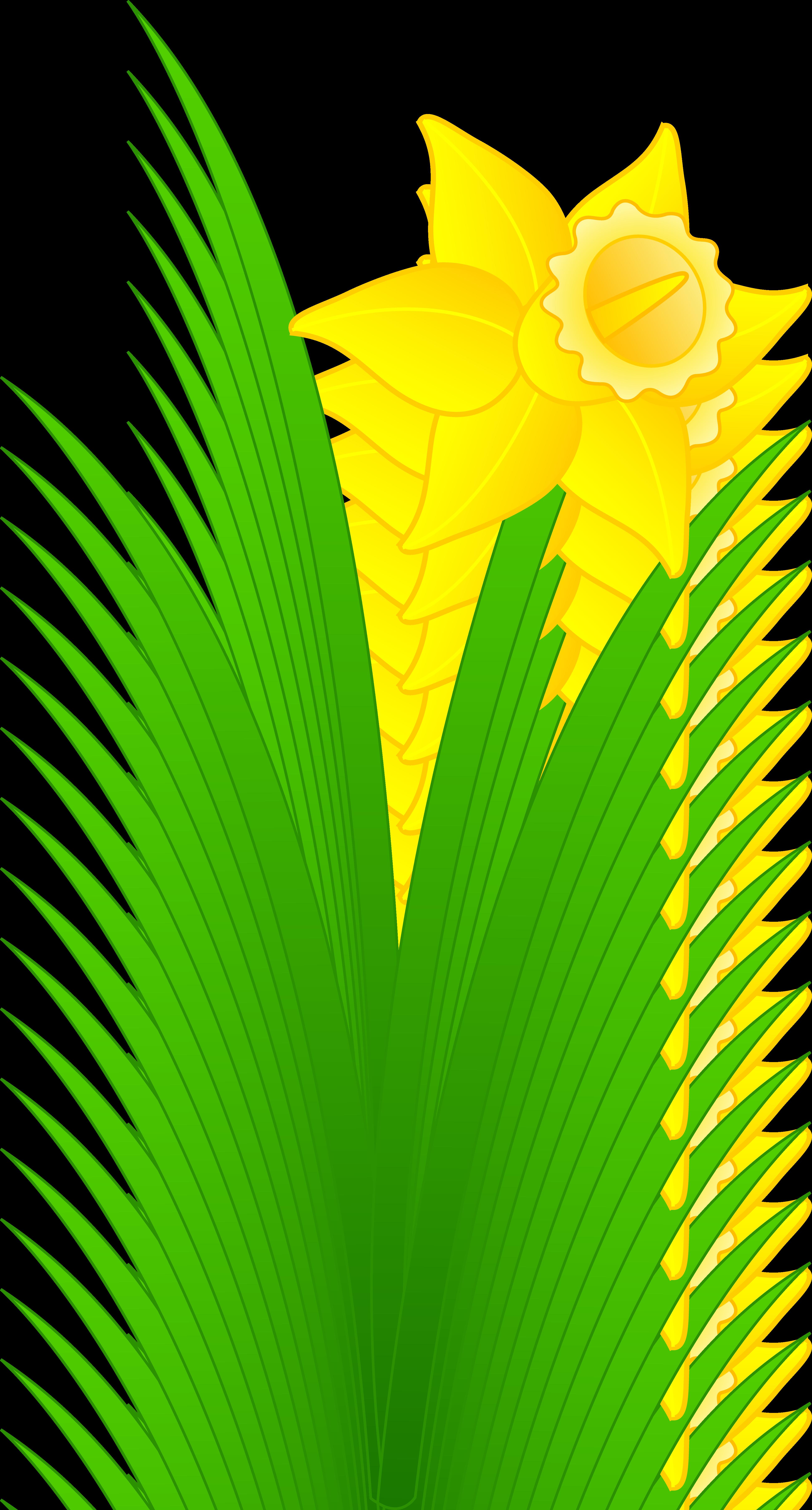 3891x7231 Daffodils Clipart