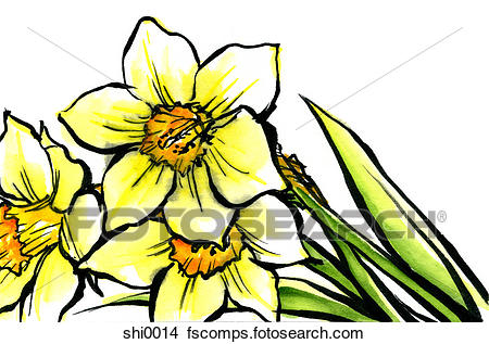 450x317 Drawings Of Daffodils Shi0014