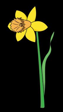 215x382 Drawn Daffodil Plant Flower