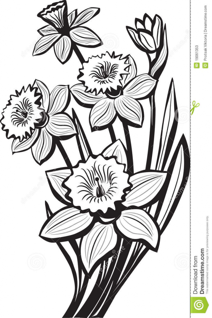 683x1024 Narcissus Flower Drawing How To Draw Daffodils, Stepstep, Flowers