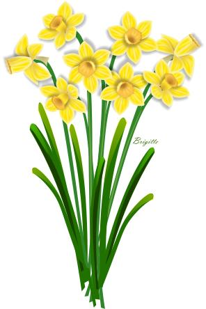 296x444 Background Clipart Daffodil