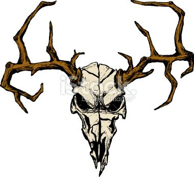 Drawings Of Deer Skulls