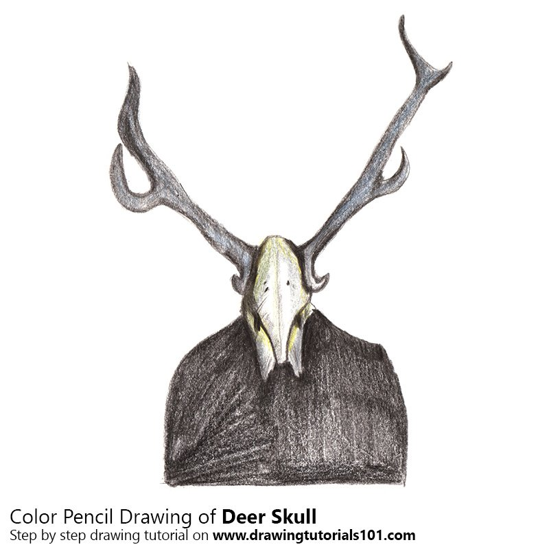 800x800 Deer Skull Colored Pencils