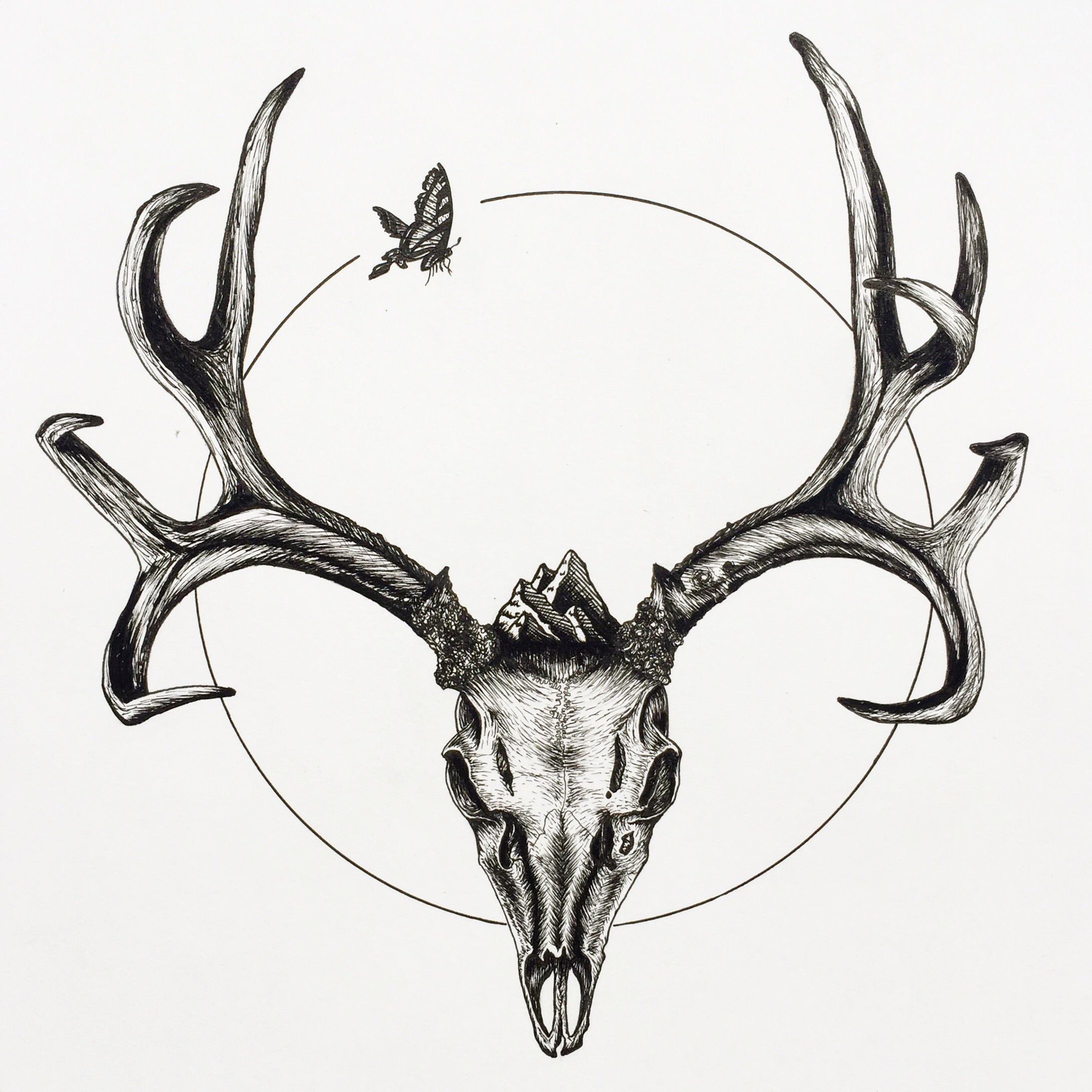 2187x2187 Mule Deer Skull With Butterfly, Ink Pen On Paper, 11.5x14