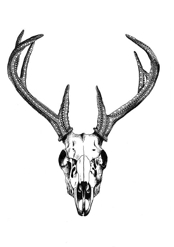 595x842 The Best Deer Skull Drawing Ideas Deer Skulls