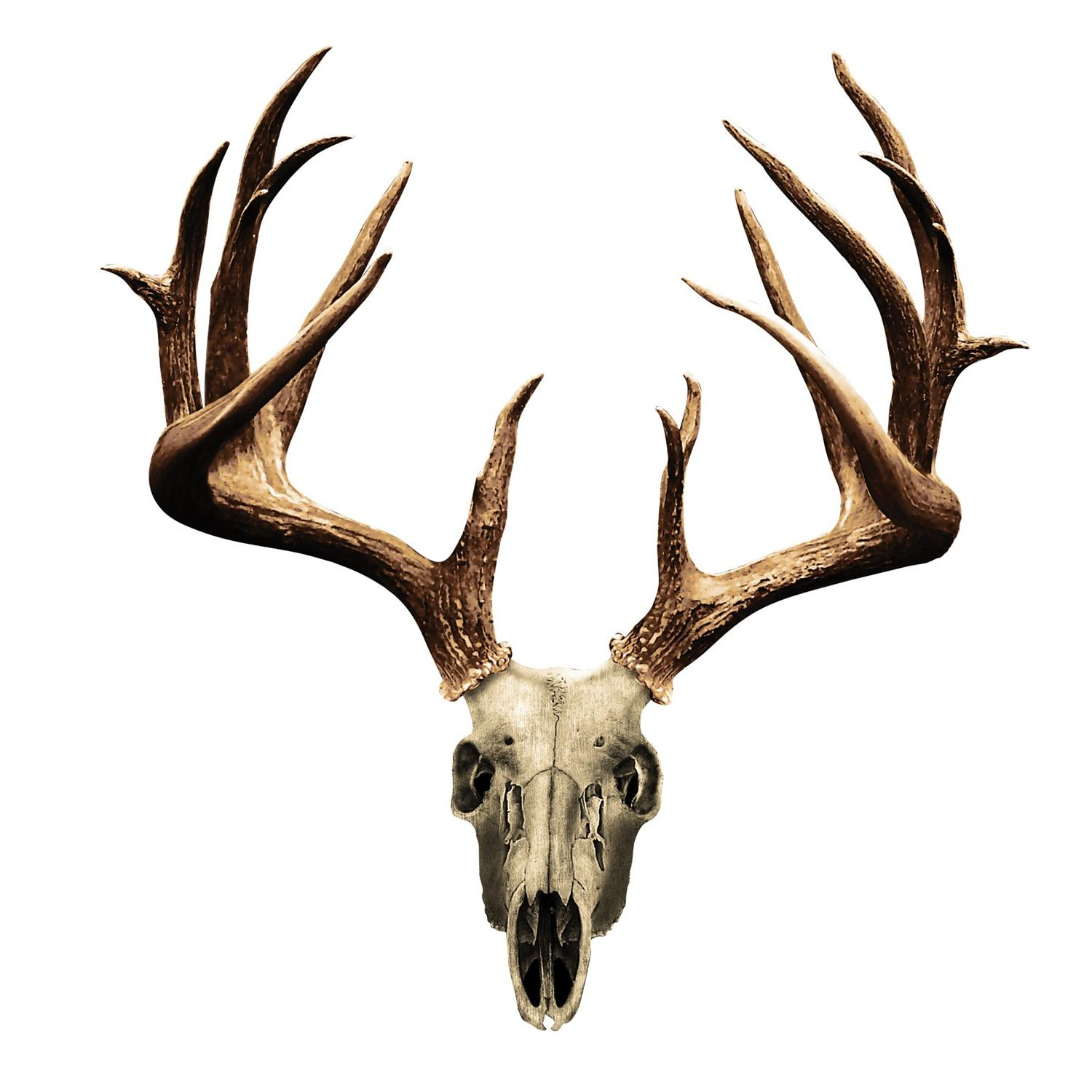 1500x1500 Top Deer Skulls And Skull Head Skeleton Drawing