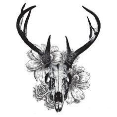 236x236 Whitetail Deer Skull Drawings