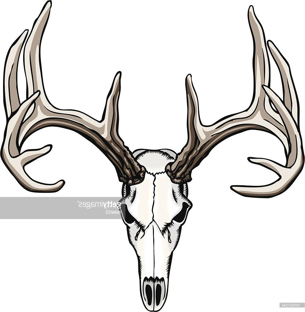 1001x1024 Best Whitetail Deer Skull And Antlers Illustration Drawing