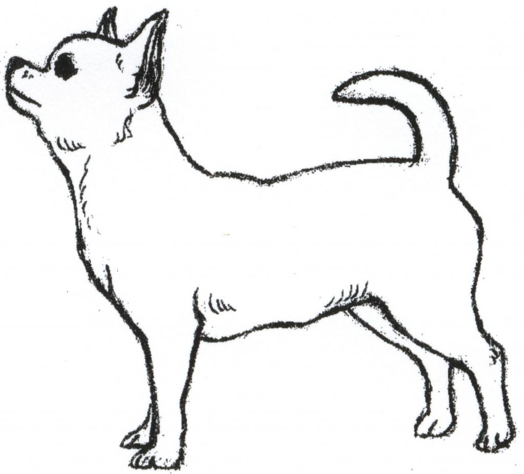 1024x926 Chihuahua Clipart Drawing