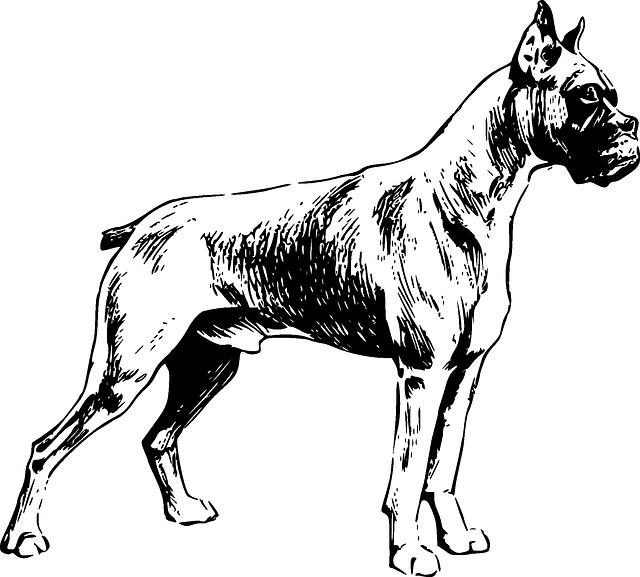 640x577 Dog, Dogs, Pet, Friend, Animal, Mammal, Drawings, Boxer