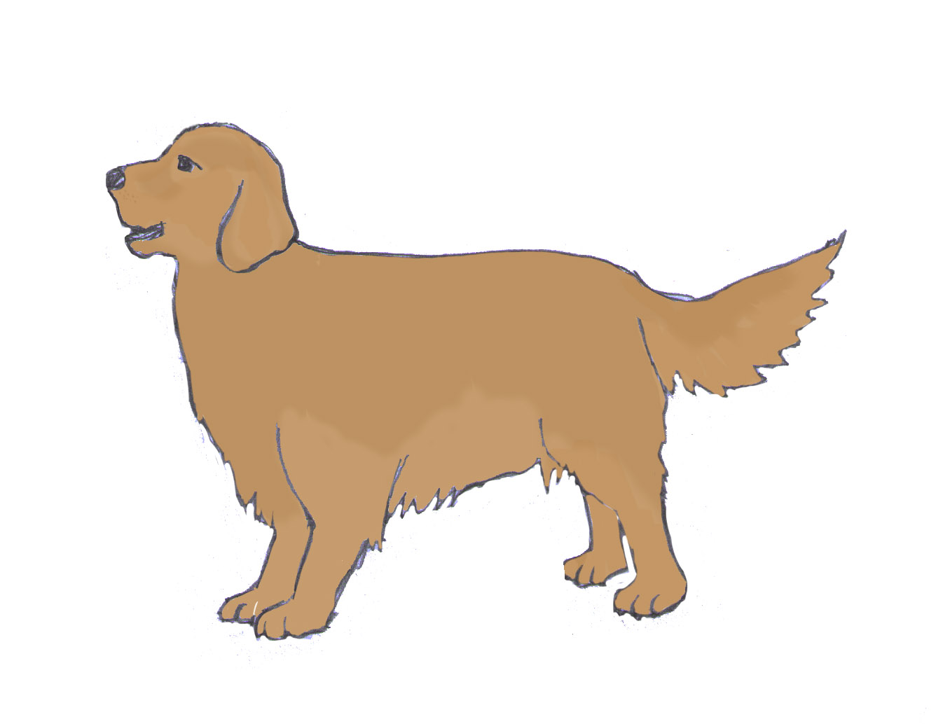 1346x1034 How To Draw A Dog