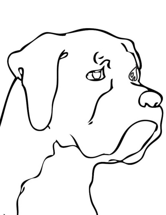 580x751 Line Drawing Dogs