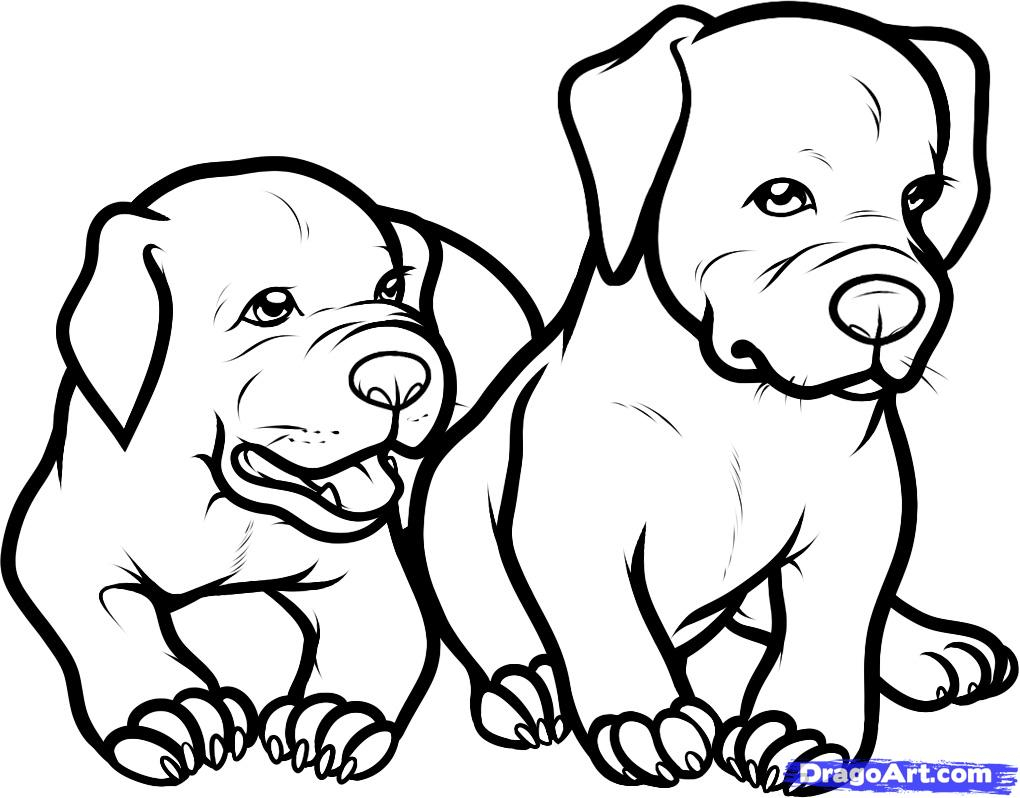 1020x798 Pitbull Dog Black And White Drawings
