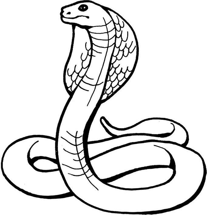 Drawings Of Rattlesnakes